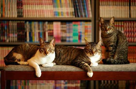 коты в библиотеке