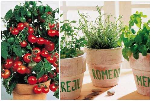 помидоры, розмарин и мята