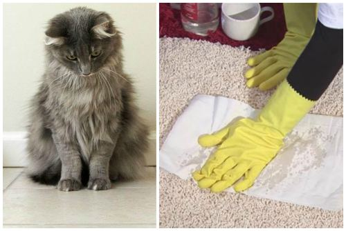 уборка за котом