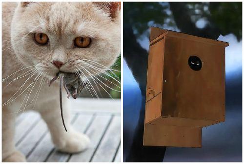 Кот и скворечник с птицей