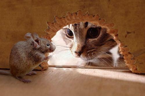 Мышка и кот