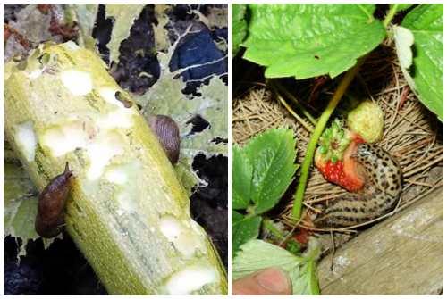поедание растений