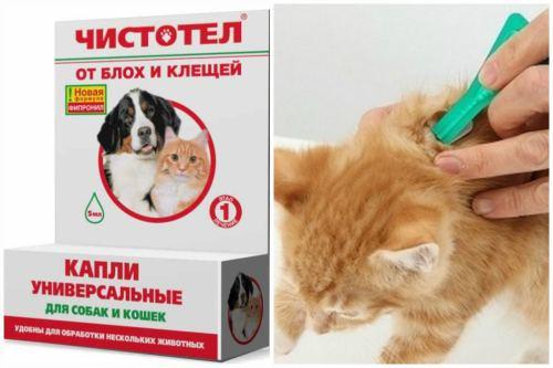 Блохи у кота как лечить в домашних условиях