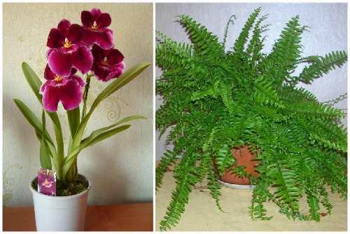 Орхидея и папоротник