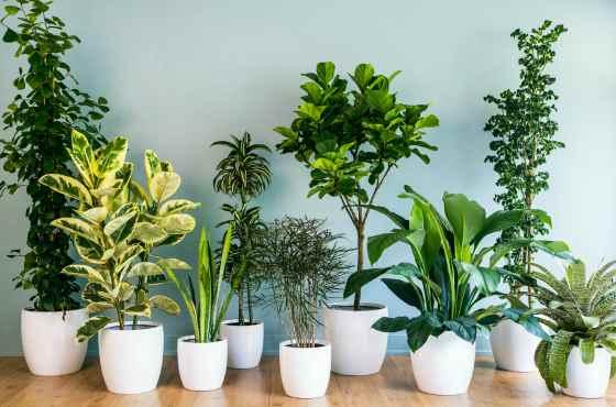 Разнообразие комнатных кустарников
