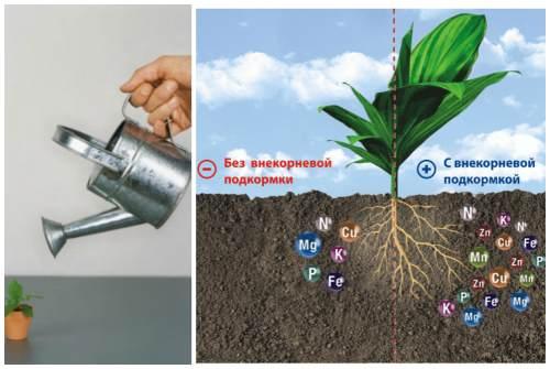 подкормка корней