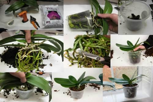 процесс пересадки растения