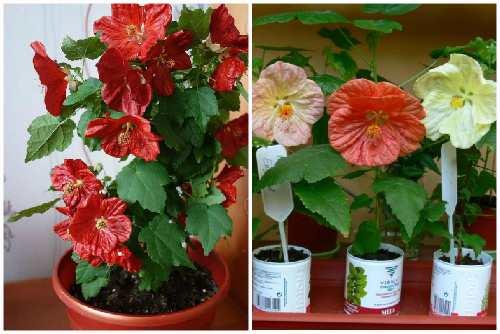 Цветы разных оттенков