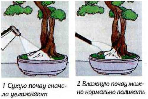 Правила полива