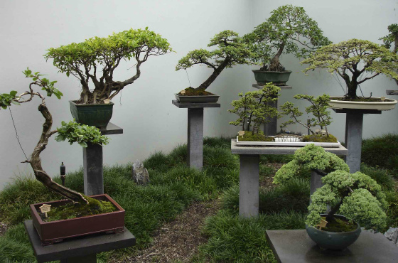 Разнообразие миниатюрных деревьев