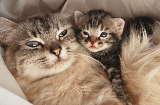 кошка с детенышем