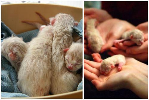 Как в домашних условиях помочь разродиться кошки 44