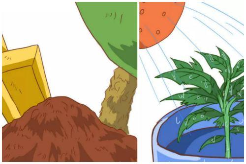 подкормка и полив