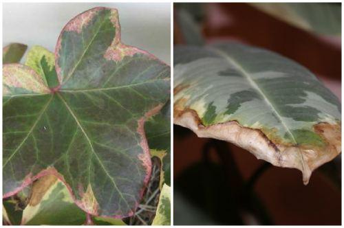 Изменение листьев
