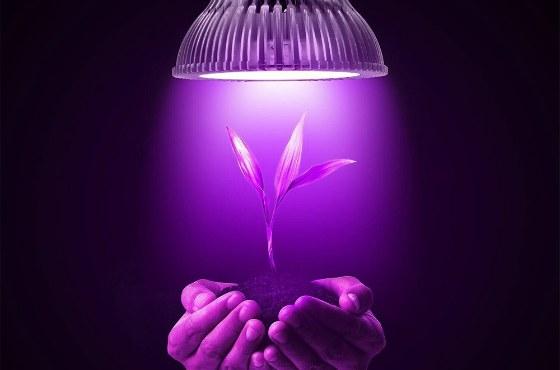 источник света для растений
