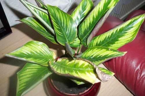 Сохнут и скручиваются листья