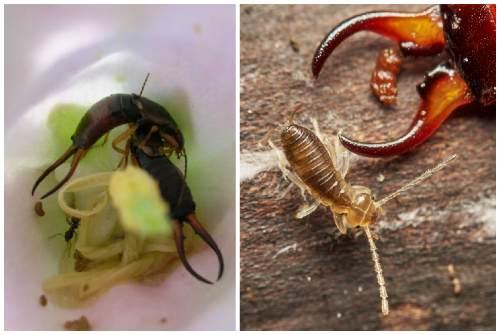 еда для насекомых