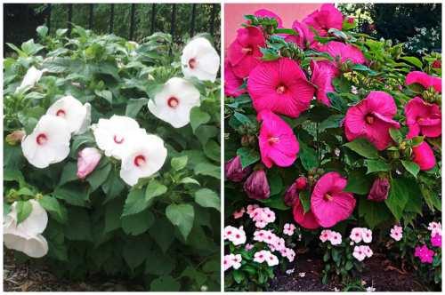 выращивание в саду