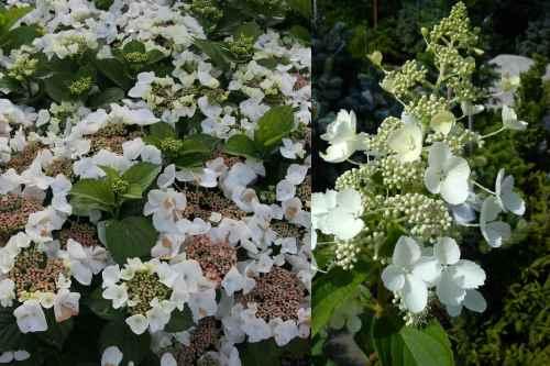 2 типа цветов