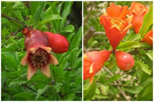 Кувшинообразные и колокольчатые цветы