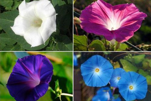 привлекательный цветок