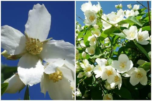 простые цветы