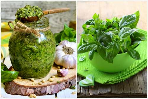 зеленый лекарь