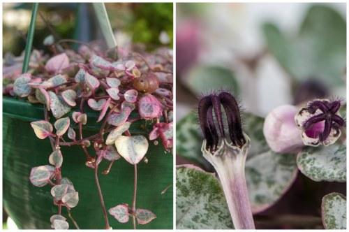 листья и цветы розового оттенка