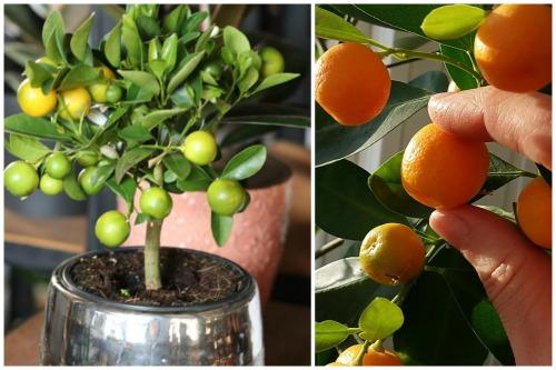 размеры плодов
