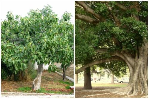размеры деревьев