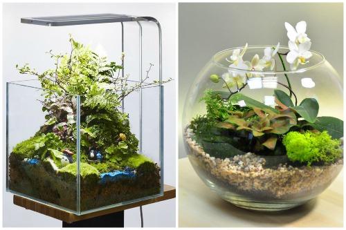 аквариумы разной формы