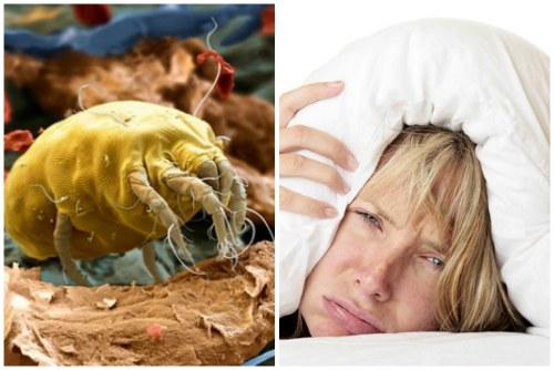 Пылевые клещи - одна из причин плохого сна