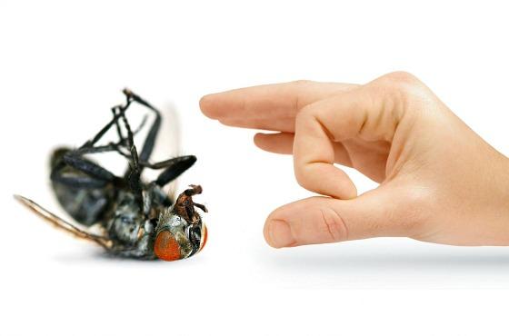 Чем избавиться от мух в домашних условиях