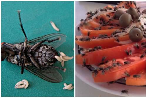 личинки и взрослые особи