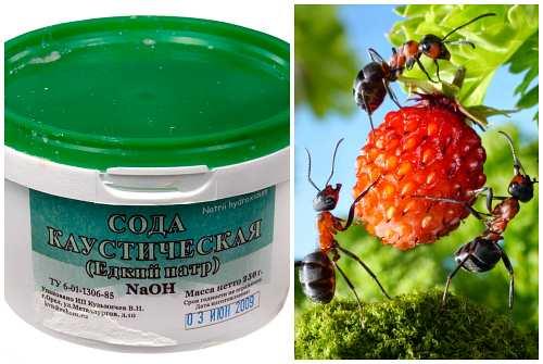 средство против муравьев