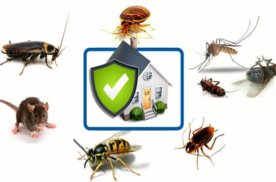 защищенный от вредителей дом