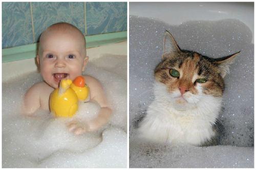 Ребенок и кот в ванной