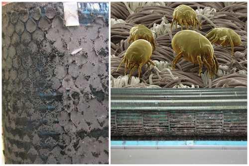 бактерии, клещи и плесень