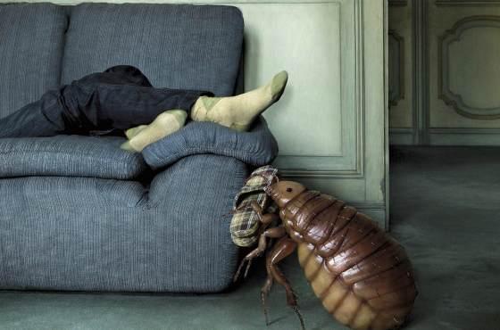 клоп в диване