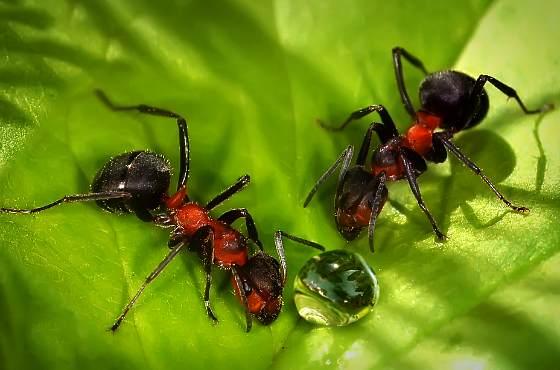 муравьи на листке