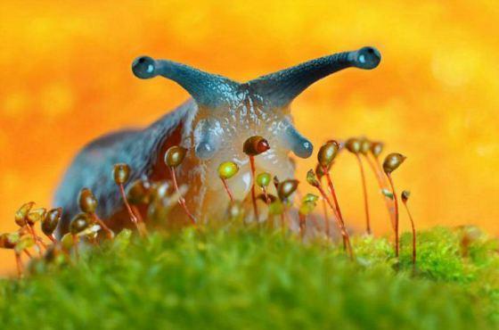 Как бороться со слизнями - Огород