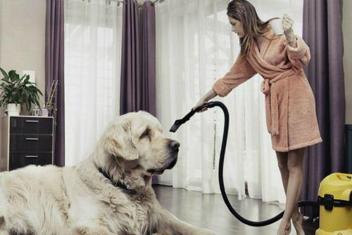 уход за собакой