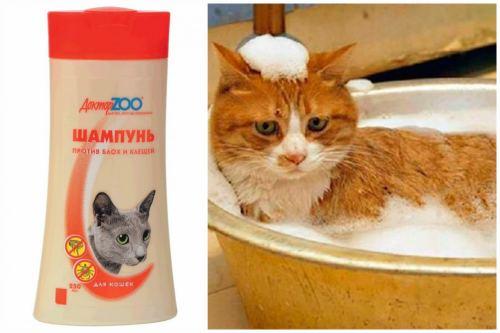 Мытье кота
