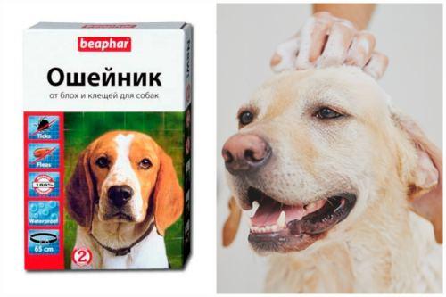 Выводим кровососов у пса