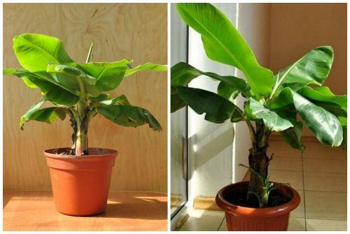 растения в горшке