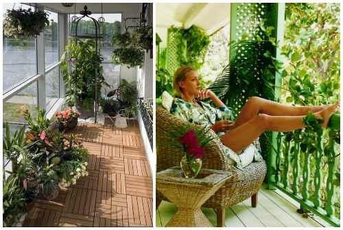 зелень на балконе