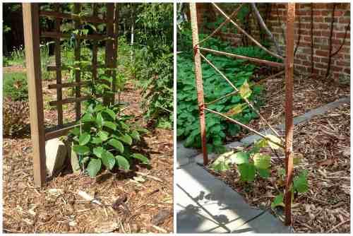 Опора для растения