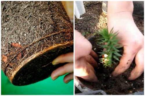 Земля для деревца