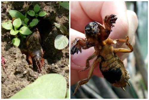 вид насекомого