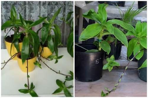 Растение в домашних условиях